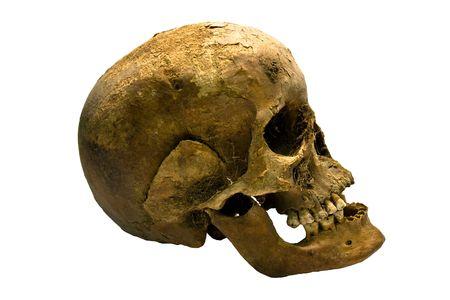 ser humano: Un antiguo cr�neo de un ser humano