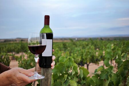 Woman's hand holding a glass and bottle of wine among the vineyards. wine growing and production