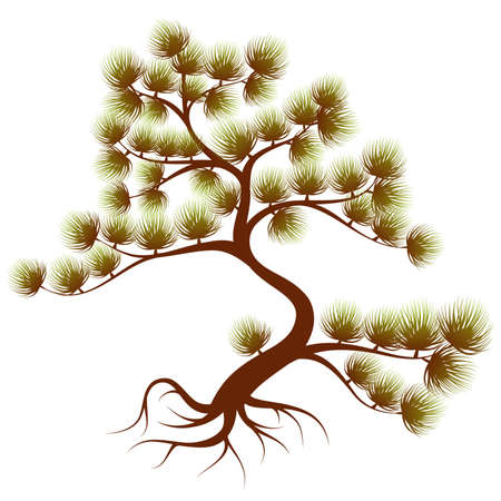 cedar: Stylized Tree cedar with needle, for design