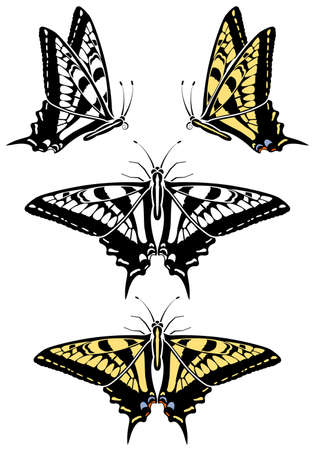 collect: Collect Butterfly, element for design