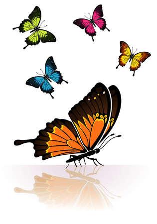 reflejo en espejo: Recopilar muchos Butterfly coloreados con una reflexi�n de espejo, elemento de dise�o