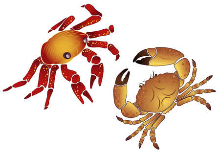 Crab, element for design,  illustration Stock Vector - 6894539