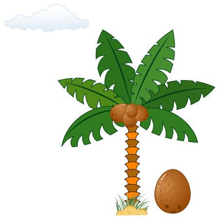 Palmier avec noix de coco, élément de design, illustration Vecteurs