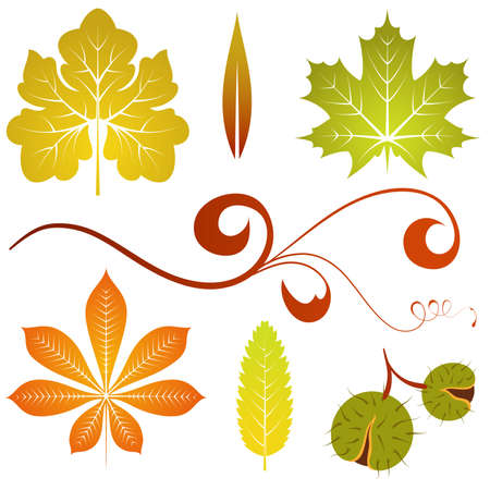chestnut: Collect isolated autumn leaves and chestnut, element for design, vector illustration
