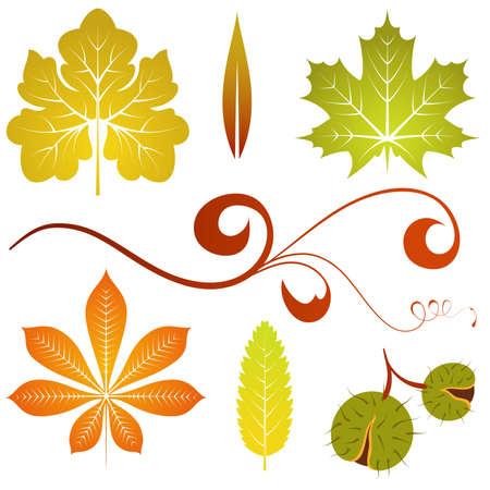 Raccogliere le foglie autunnali isolati e castagno, elemento di design, illustrazione vettoriale