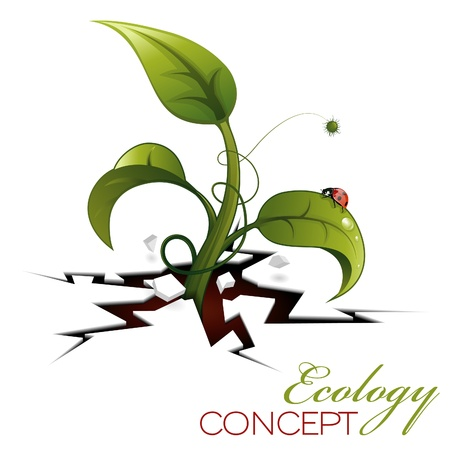 Green Sprout, Break out of the Cracks with Water Drops and Ladybug Stock Vector - 12799432