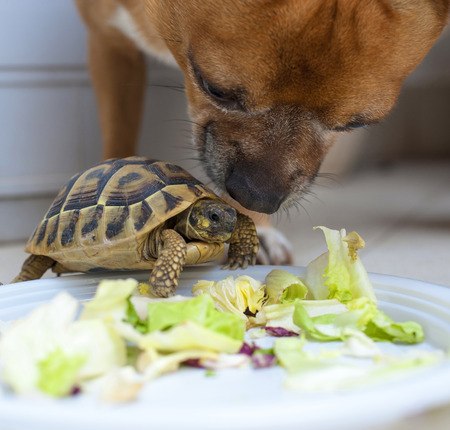 turtles love: Turtle and Dog in love on a white