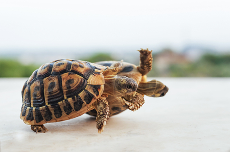two small green turtles that rolling together