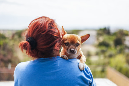 funny boston terrier: woman hugging a dog and watching a beautiful landscape