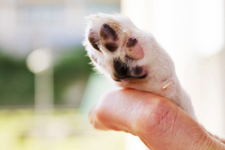 animal limb: Man and puppy shaking hand and paw Stock Photo