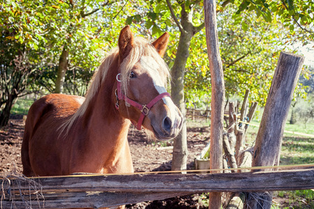 full blooded: brown thoroughbred horse standing in beautiful landscape Stock Photo
