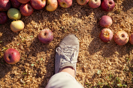 reddening: Farmer?s boot on ground with Italian typical apples