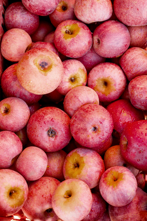 reddening: lot of Italian typical apples on the ground