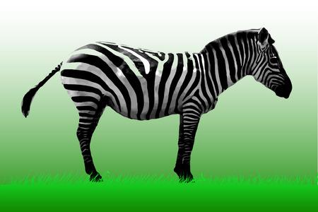couple lit: Zebra photorealistic1