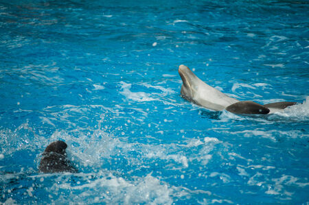 dolphinarium: Dolphinarium, dolphins show in Lisbon Zoo  Portugal
