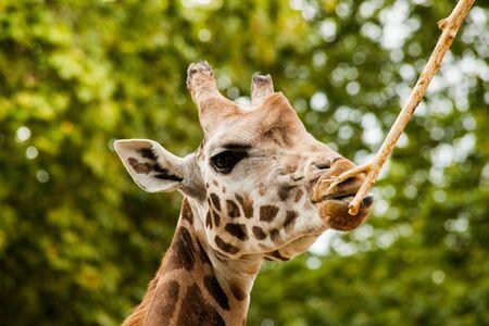 zoologico: Antwerp Zoo es un zoológico en el centro de Amberes, Bélgica, situada justo al lado de la estación de tren de Antwerpen-Centraal. Foto de archivo