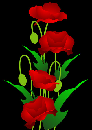 Red poppy flowers on the black background, Vector illustration Vector