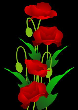 Red poppy flowers on the black background, Vector illustration Vector