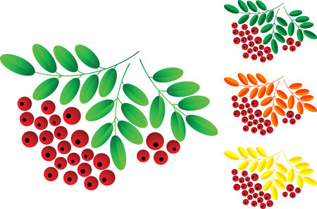 Red rowan berries set, isolated. illustration Stock Vector - 6399515
