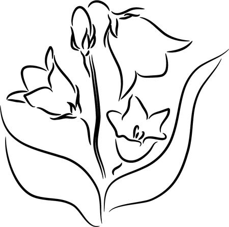 bellflower: Beautiful vector illustration of a Bellflower, isolated