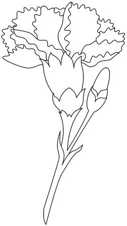 Piękna grafika wektorowa, ilustracja kwiat goździka