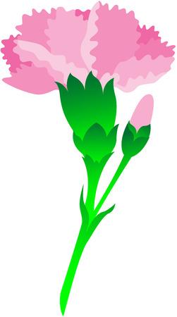Beautiful image, illustration of Carnation flower Vector