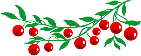Vector illustration of the red Cranberry, Isolated.