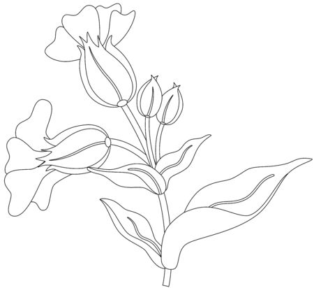 vectorial: Beautiful illustration of a fresh spring flower, isolated