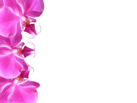 Frame made of fresh pink orchid flowers                                photo