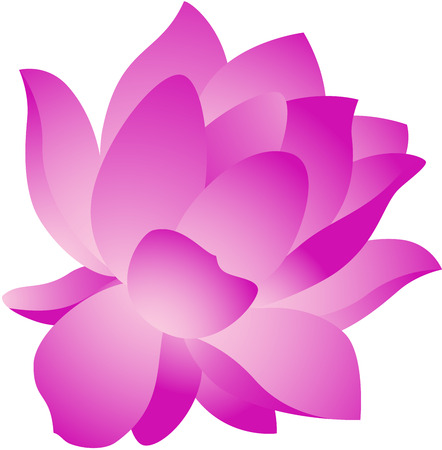 pink lotus: Beautiful illustration of a fresh lotus flower