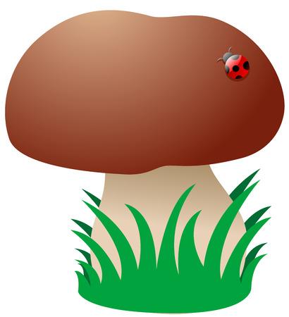 edible mushroom: Cartoon Mushroom with grass Illustration