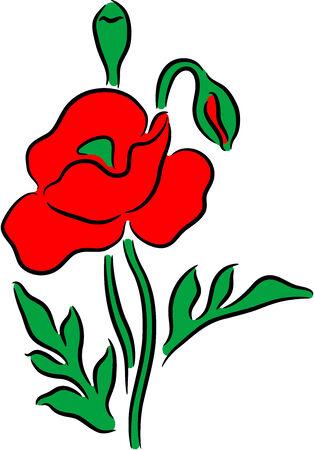 Beautiful poppy flower Stock Vector - 7296446