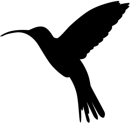 Vectored illustration as silhouette of hummingbird, commonly known also as honey bird, isolated