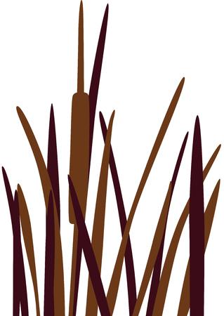 rietkraag: Riet gras silhouet, geïsoleerd. Stock Illustratie