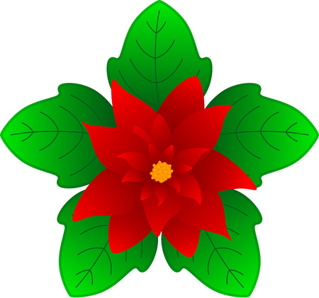 starlike: Poinsettia is a traditional Christmas Flower. Also known as Bethlehem Star or Christmas Star in some countries. illustration, isolated