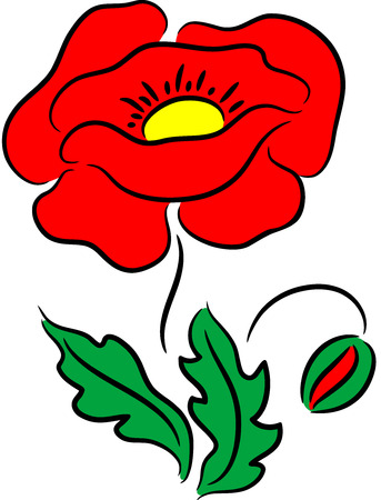 Beautiful poppy flower, isolated. illustration Vector