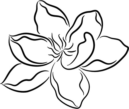 Beautiful illustration of a fresh flower, isolated Stock Vector - 7557832