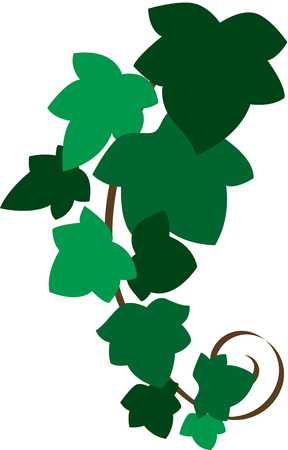 The black twig of ivy,  Illustration, isolated Vector