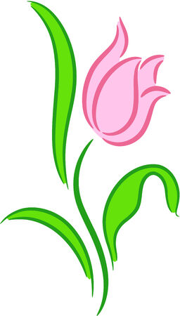 stalks: Beautiful illustration of a pink Tulip flower, isolated
