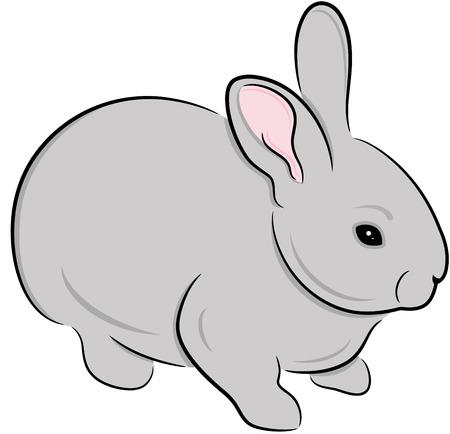 lepre: Coniglio domestico, isolato. Illustrazione degli animali carino.