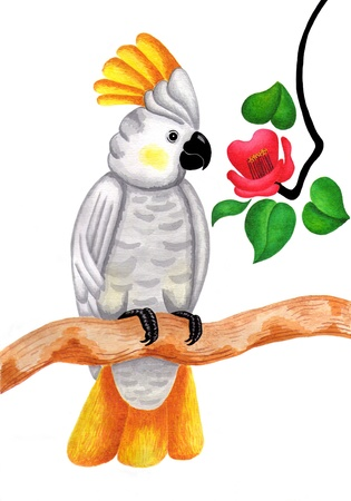 An original watercolor painting of  Cockatoo parrot  photo