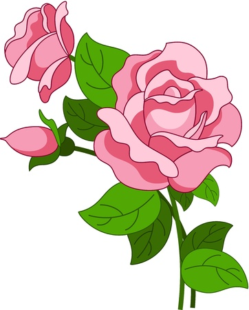 Beautiful illustration with pink rose flower, isolated Ilustração