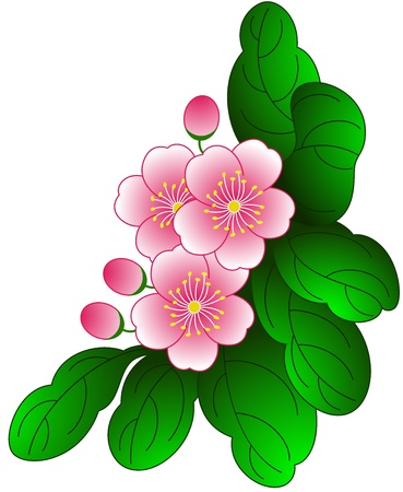 treelike: Blooming beauty of spring flower, isolated  Vector illustration