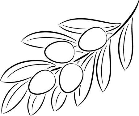 olijf: Illustratie van olijftak contour, geïsoleerd Stock Illustratie