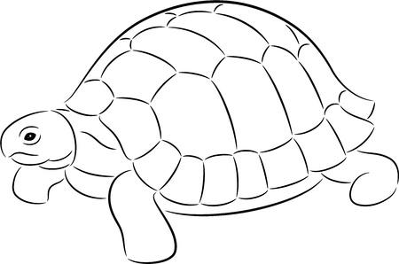 tortue de terre: Illustration d'un contour de tortue, isol� Illustration