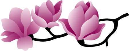 Blossoming twig of magnolia-tree, isolated Vectores