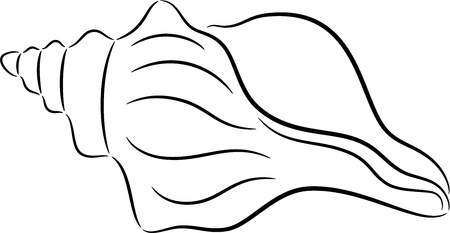 illustration of sea shell contour, isolated