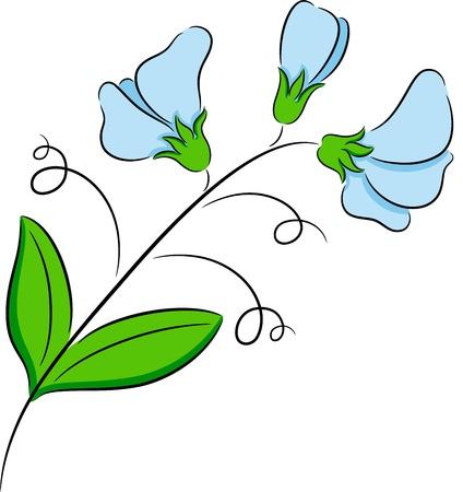 sweet pea flower: Illustration of  fresh sweet pea flower, isolated Illustration
