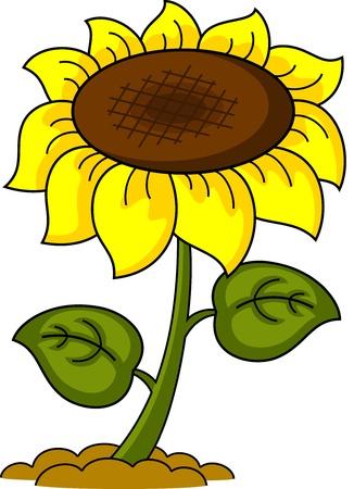 olfato: ilustración de dibujos animados de un girasol, aislados