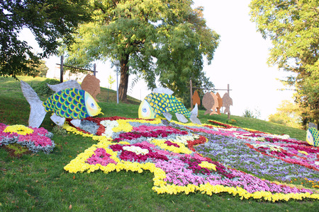 fish exhibition: Composition of flowers and plants on the exhibition chrysanthemums Photo taken on: October 9, 2014, Ukraine, Kiev